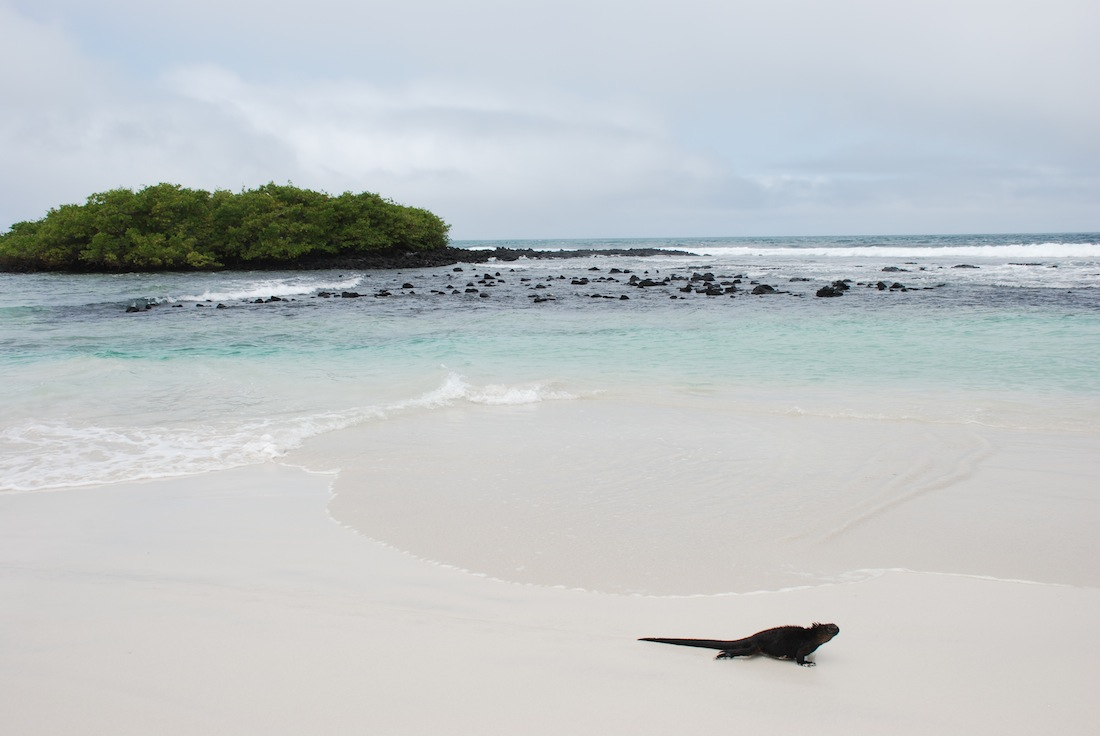 A Budget Guide To Visiting The Galapagos Islands