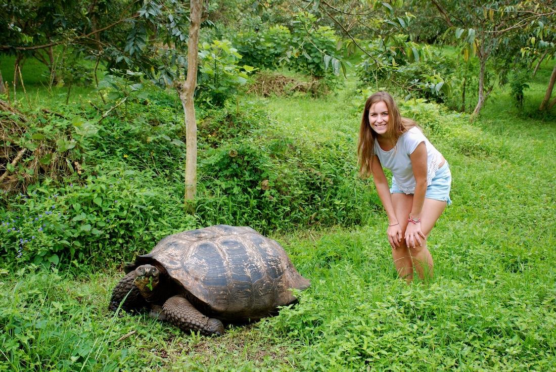 galapagos-tortoise-beckyvandijk