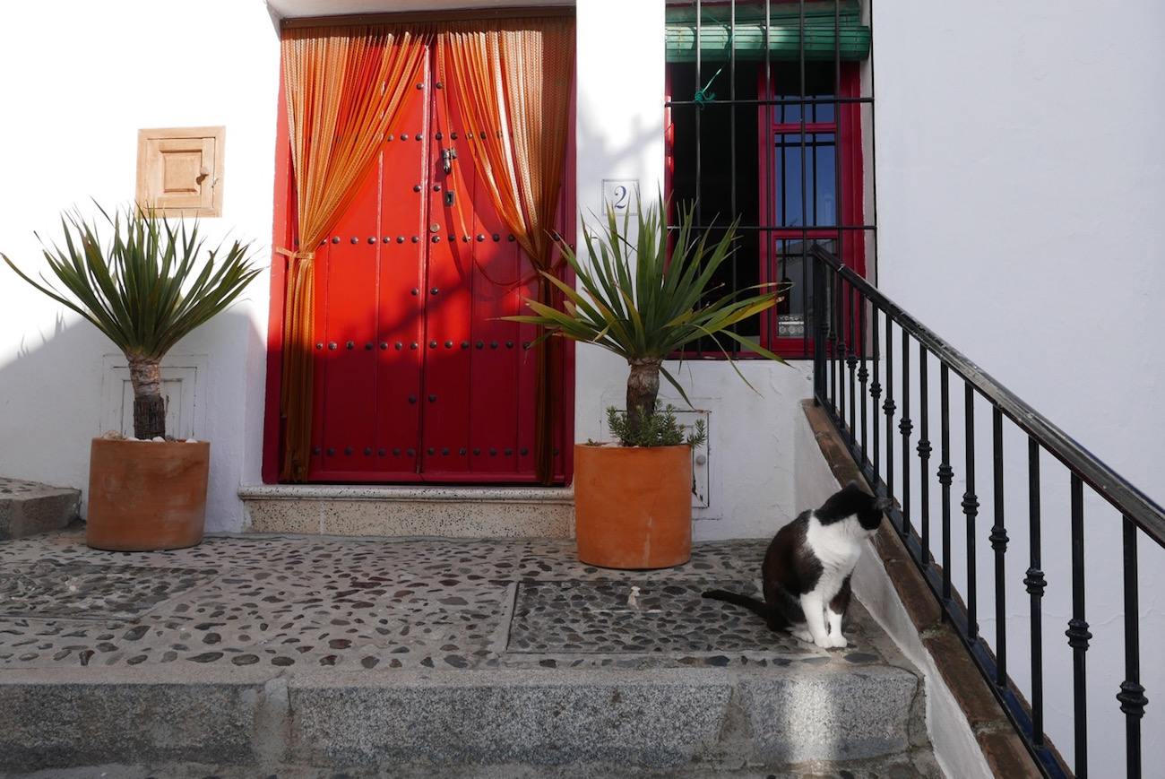red-door-cat-frigiliana