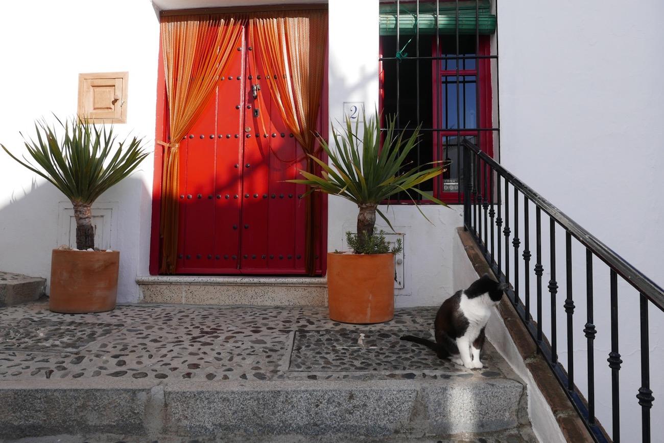 red-door-cat-frigiliana