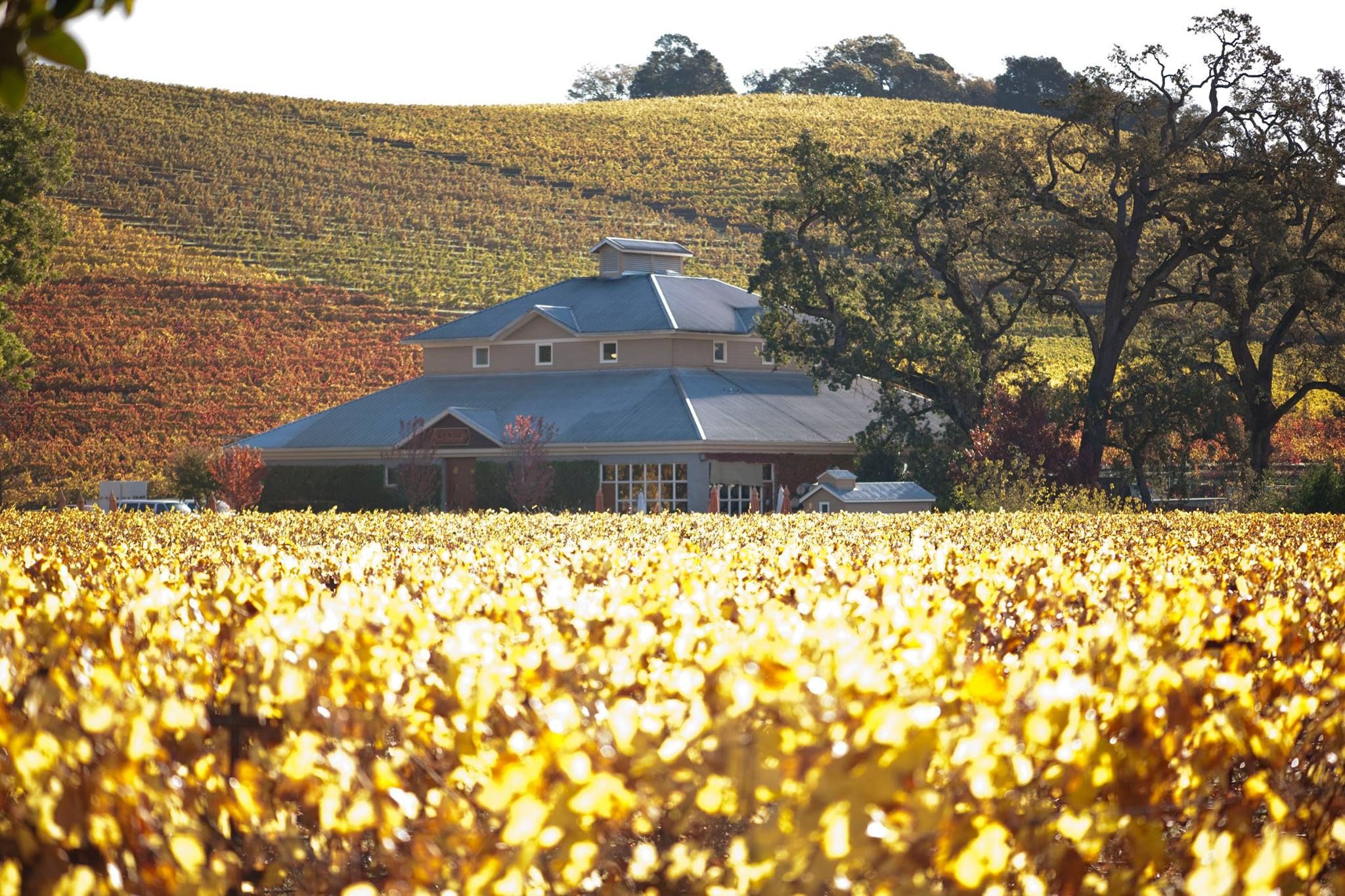 Sip Your Way Through Northern Sonoma County