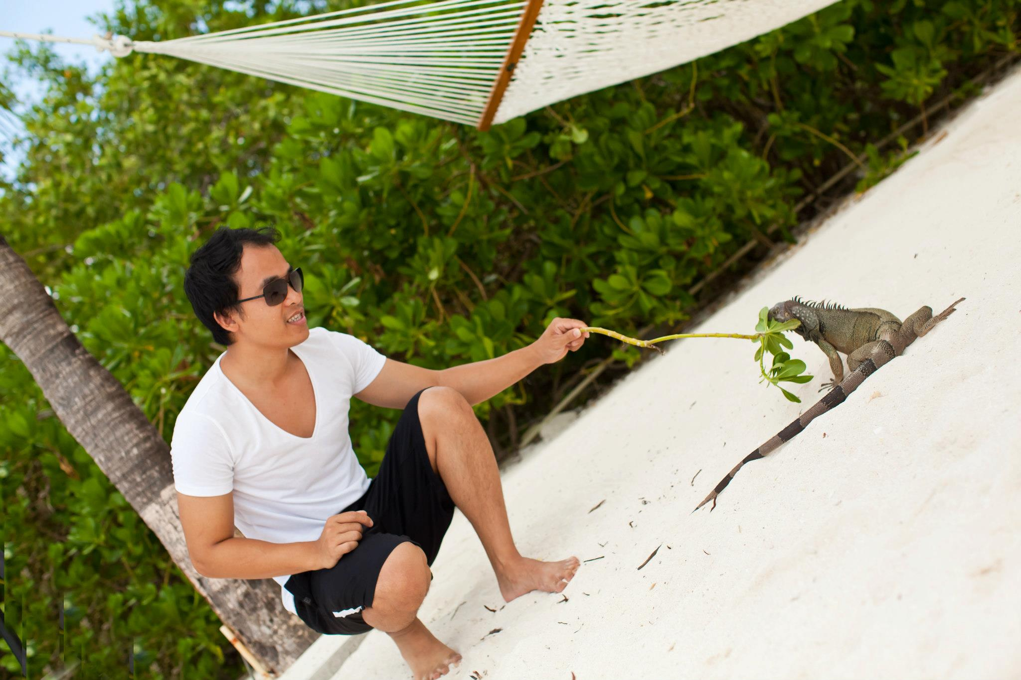 feeding-iguanas