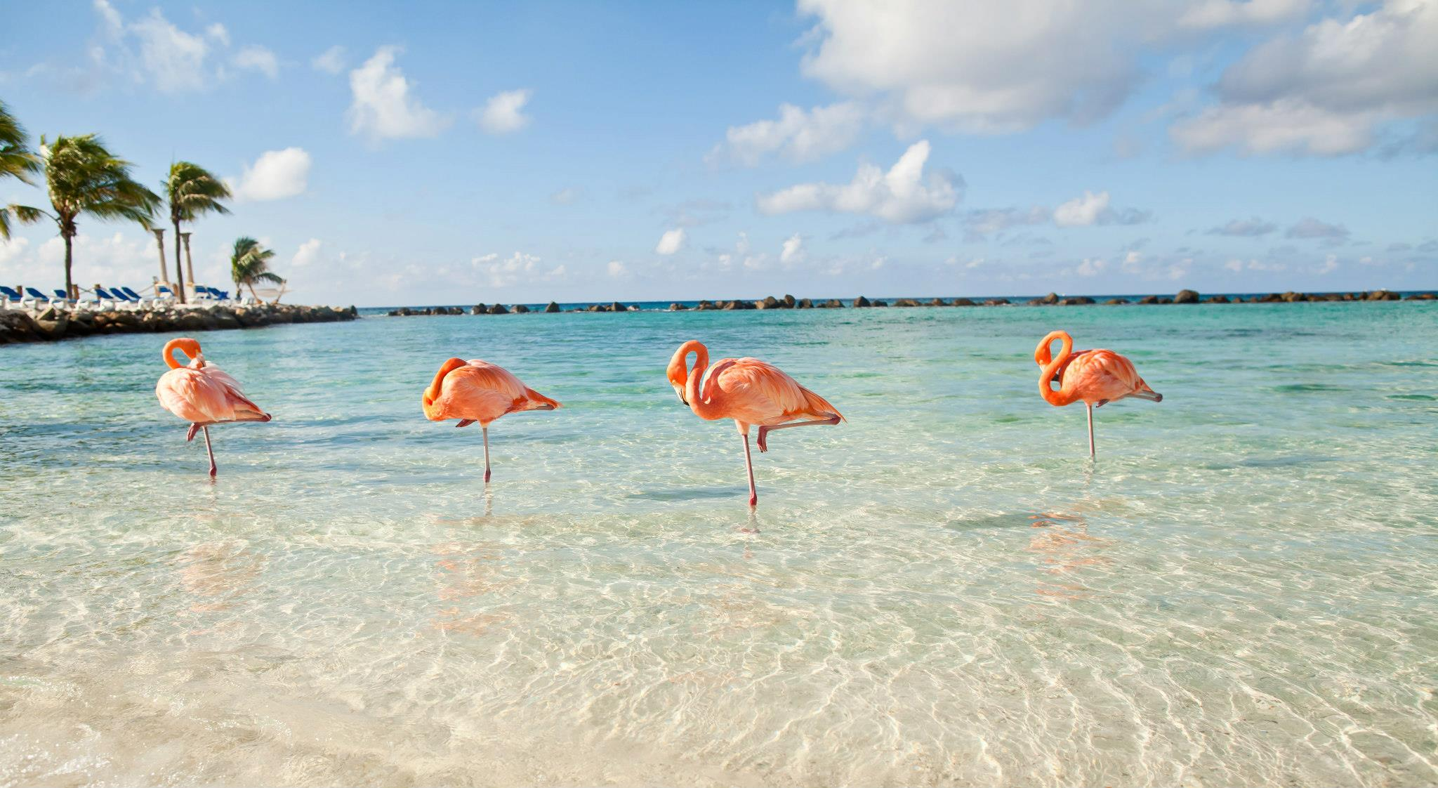 flamingo-beach1