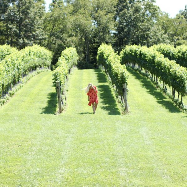 THE BEST OF VIRGINIA WINE COUNTRY: PIPPIN HILL FARMS