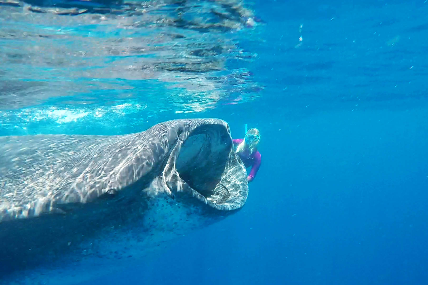 we-are-travel-girls-whale-shark