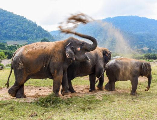 1-elephants-happy
