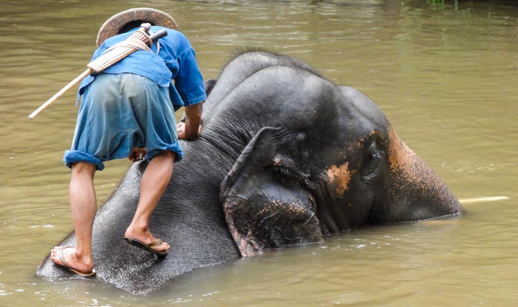 4-elephant-river