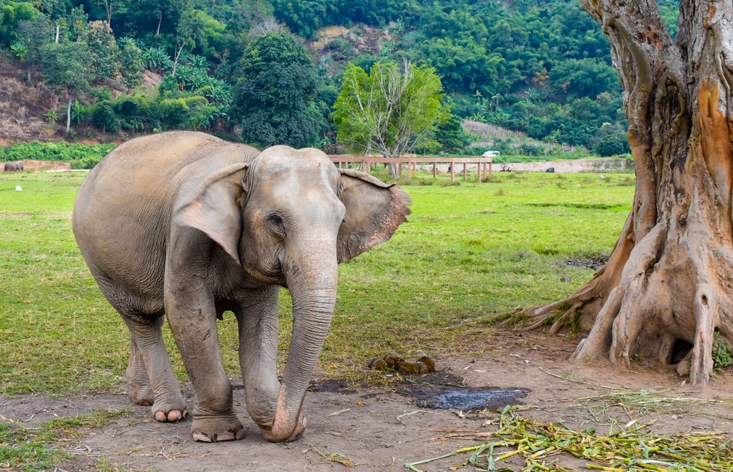 5-elephant-tree-logging