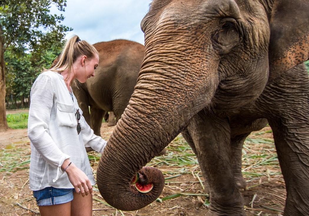 6-elephant-christine