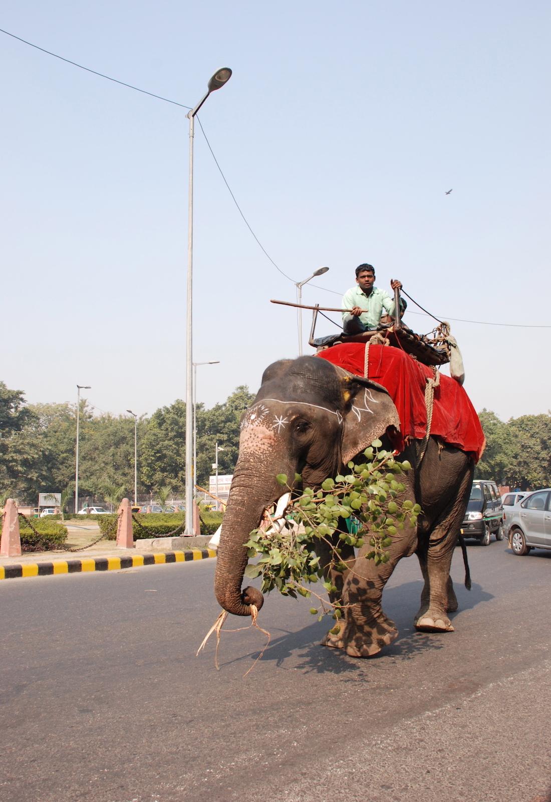 responsible-travel-elephants-1