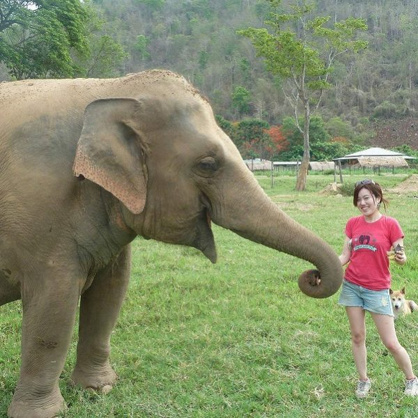 VOLUNTEERING AT THE ELEPHANT NATURE PARK, CHANG MAI