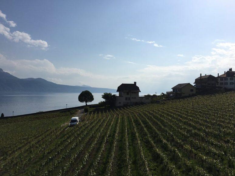 lavaux-vineyard-terraces-in-rivaz-switzerland