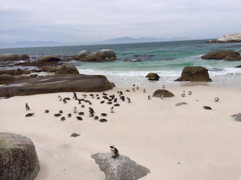 12-boulders-beach