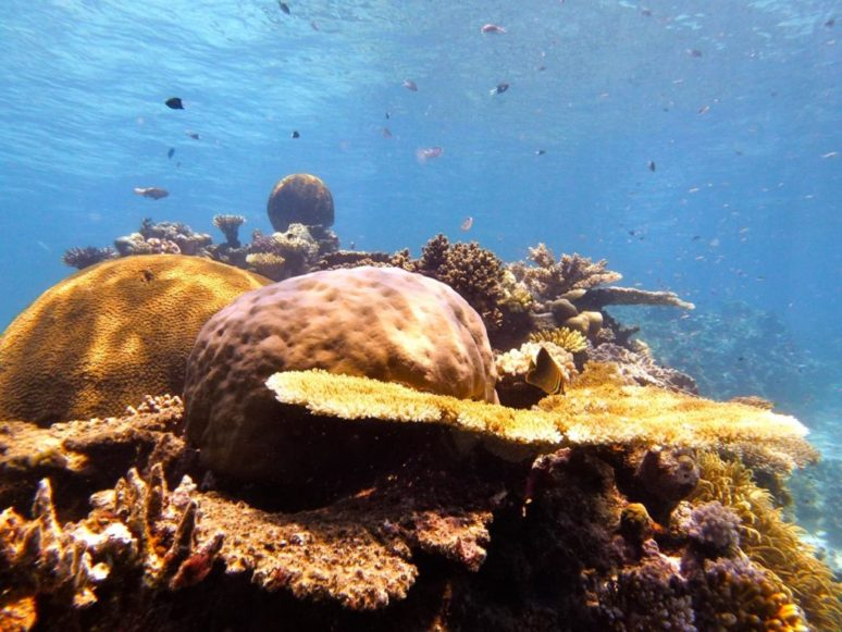scuba diving, Great Barrier Reef