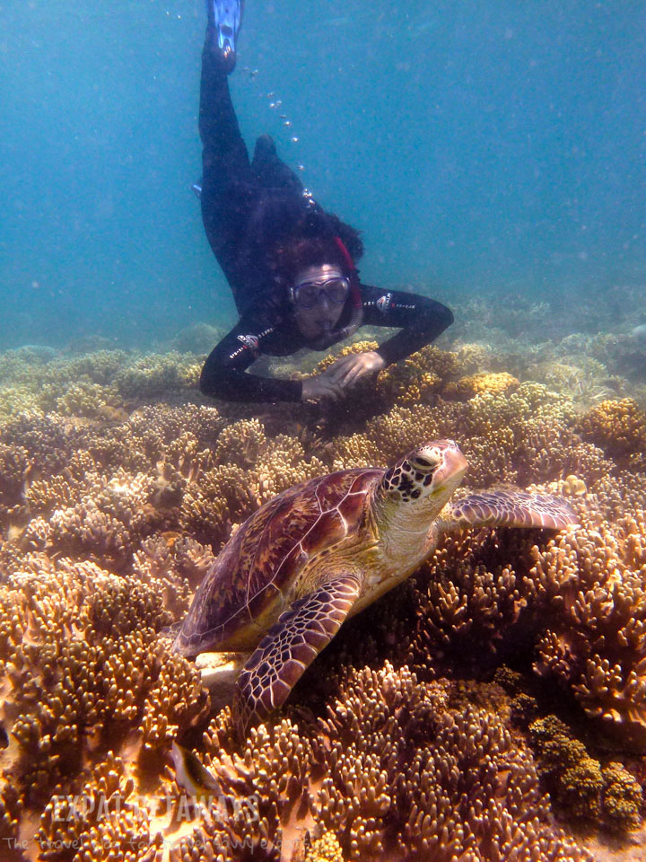 7 Reasons To Learn To Scuba Dive On The Great Barrier Reef