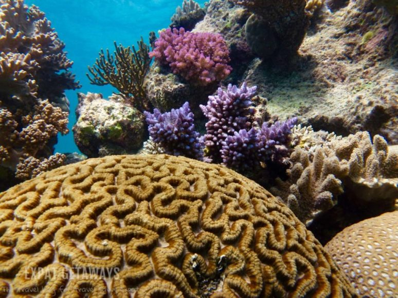 scuba diving, Great Barrier Reef, Australia
