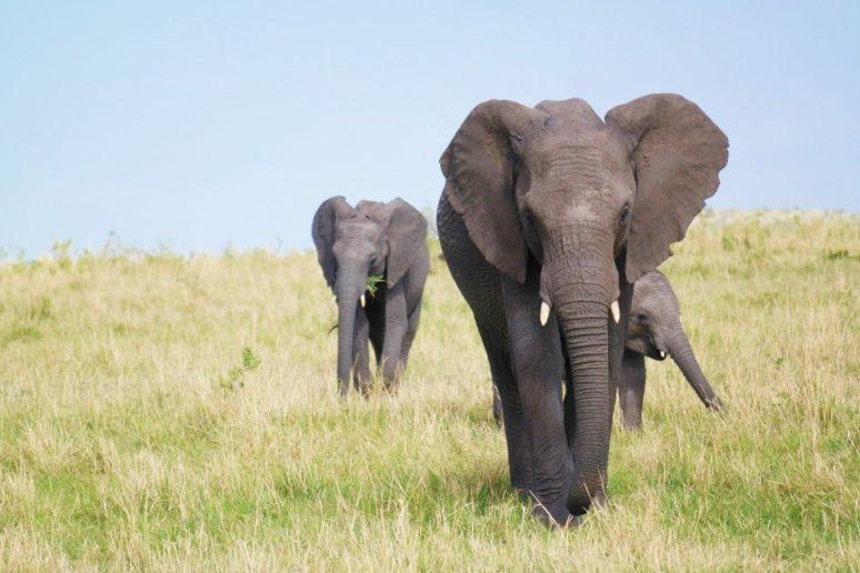see-elephants-in-the-wild-responsibletraveller