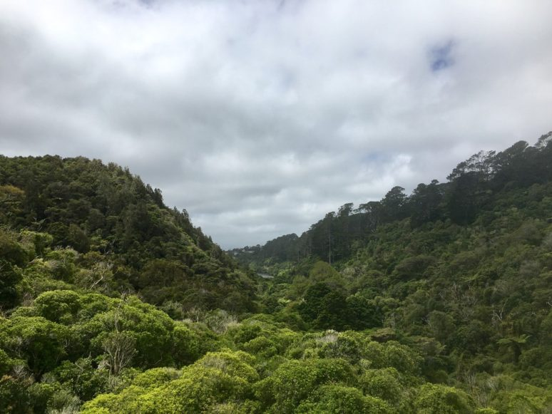 zealandia-wellington-panorama