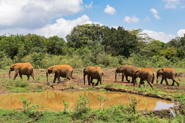 My Day In Nairobi With Elephants And Giraffes