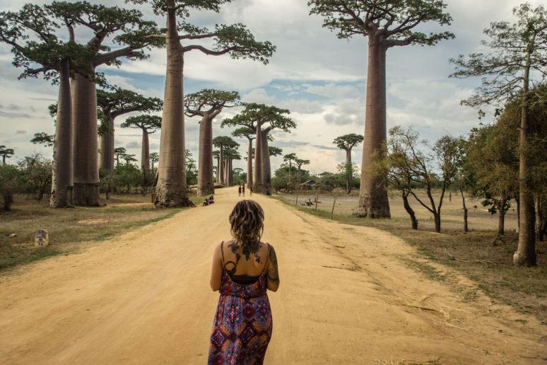 Madagascar-MorondavaAvenueofBaobabs
