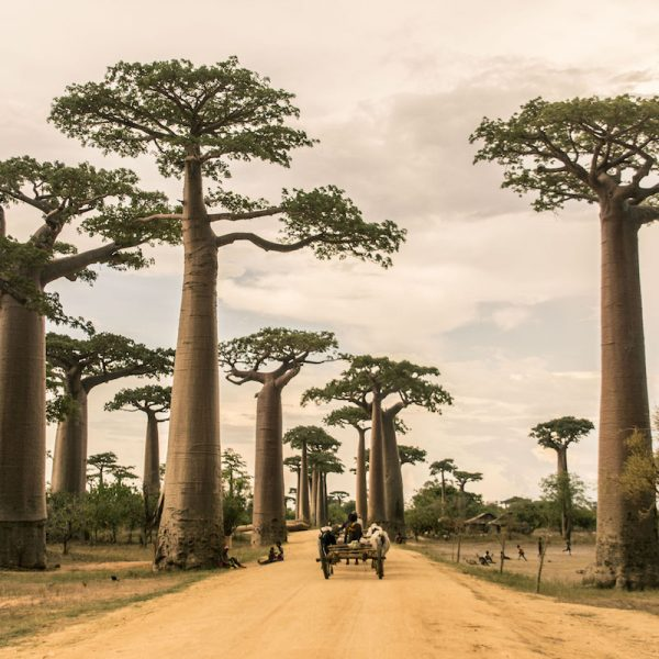 EAST TO WEST & BACK AGAIN:  A GUIDE TO MADAGASCAR