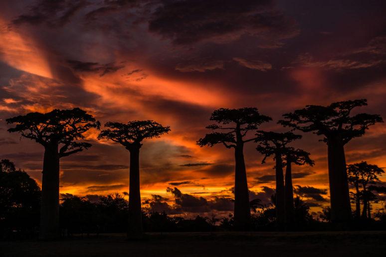 Madagascar-Sunset-Avenur-of-Baobabs