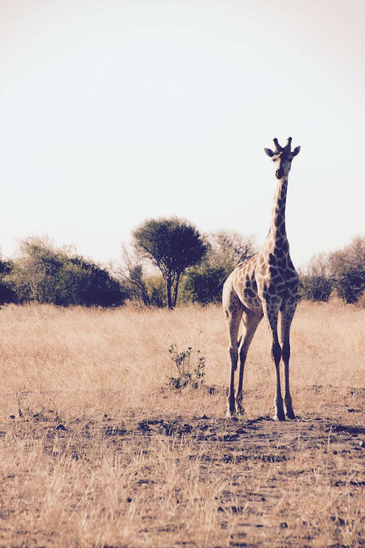 A Quick Guide For Your First Africa Adventure