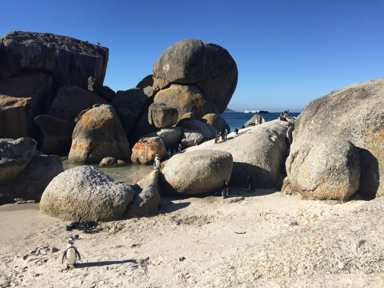Cape-Town-Boulders-Beach-2 10 AWESOME THINGS TO DO IN CAPE TOWN, SOUTH AFRICA
