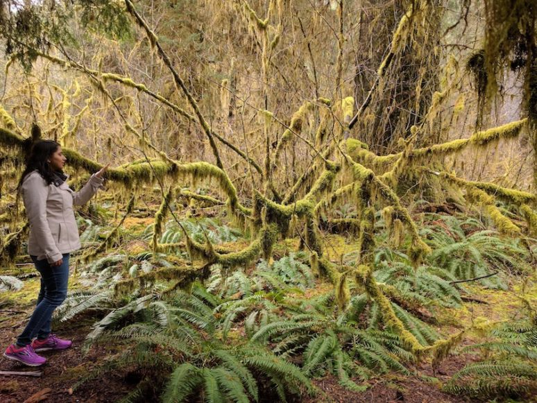 Olympic-National-Park-Hoh-Me EXPLORING OLYMPIC NATIONAL PARK, SEATTLE