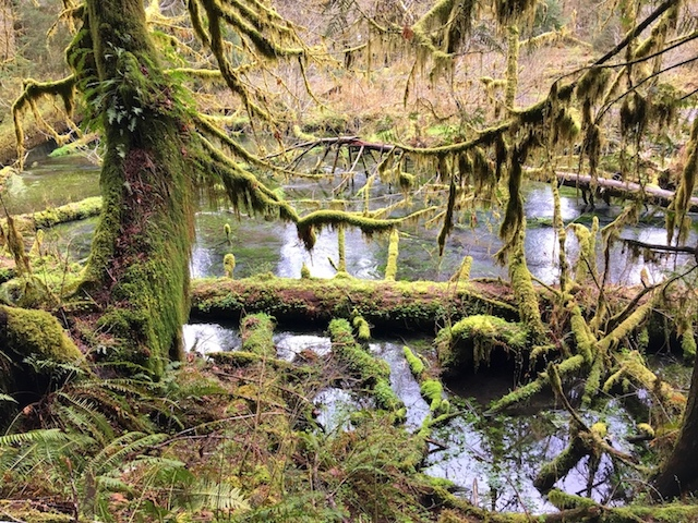 Olympic-National-Park-Hoh-Stream EXPLORING OLYMPIC NATIONAL PARK, SEATTLE
