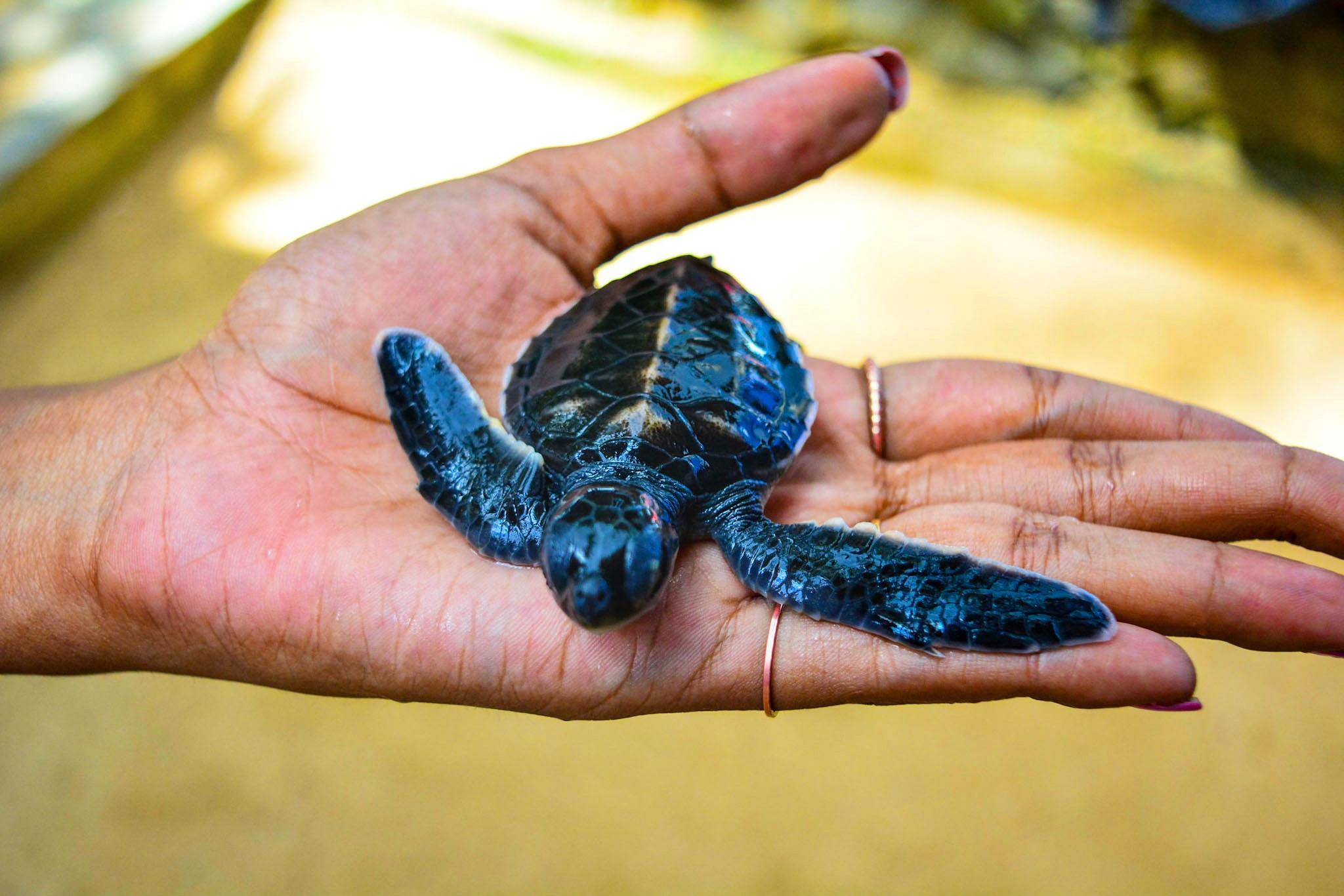 8 INCREDIBLE THINGS TO DO IN SRI LANKA