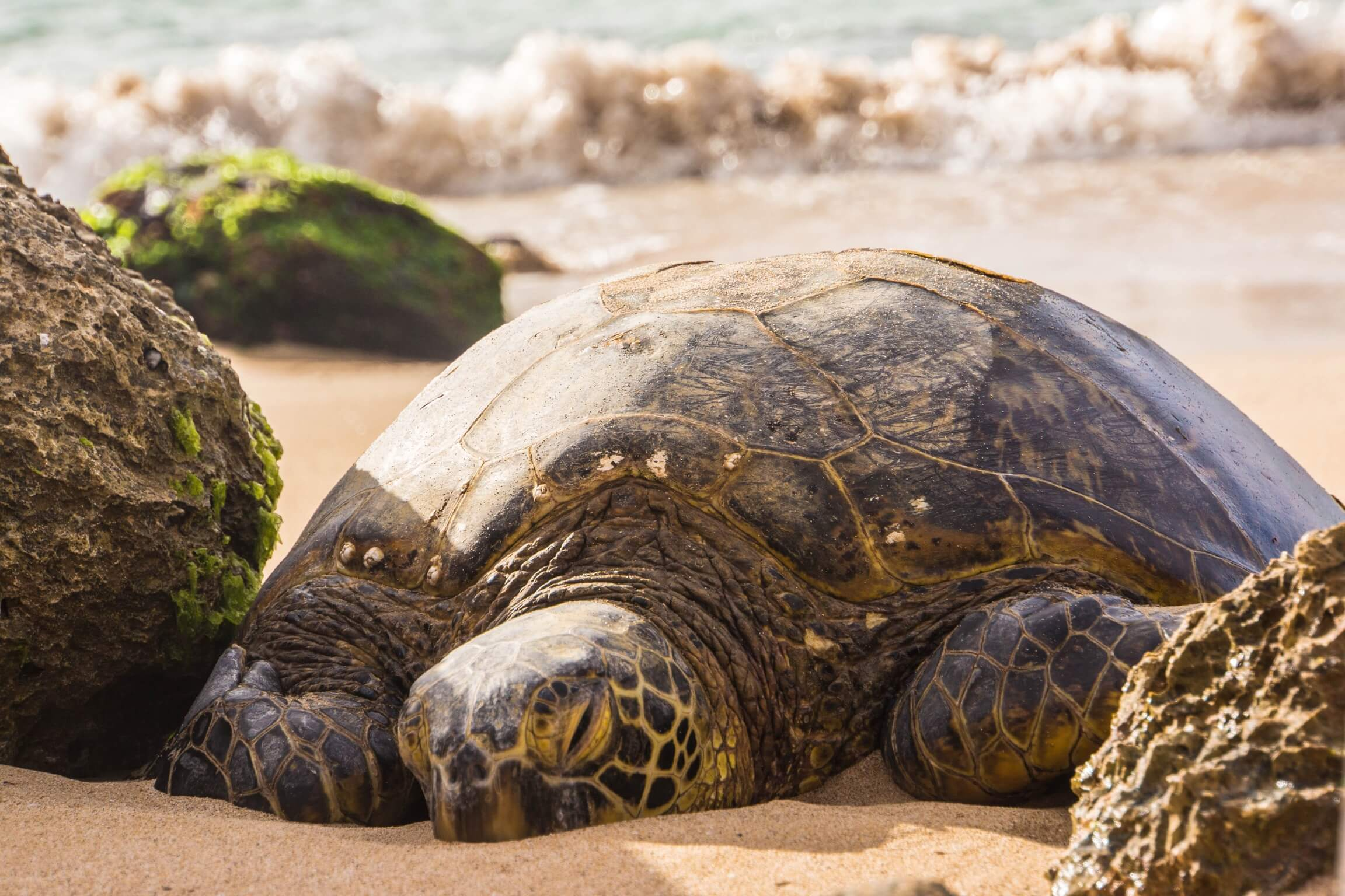 5 MUST-HAVE EXPERIENCES IN OAHU, HAWAII