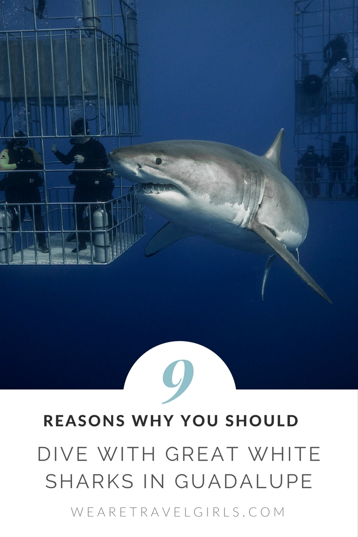 9 REASONS DIVING WITH GREAT WHITE SHARKS SHOULD BE ON YOUR BUCKET LIST