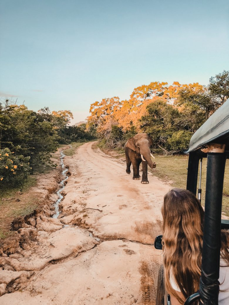 Yala National Park Elephant Chasing Safari Jeep