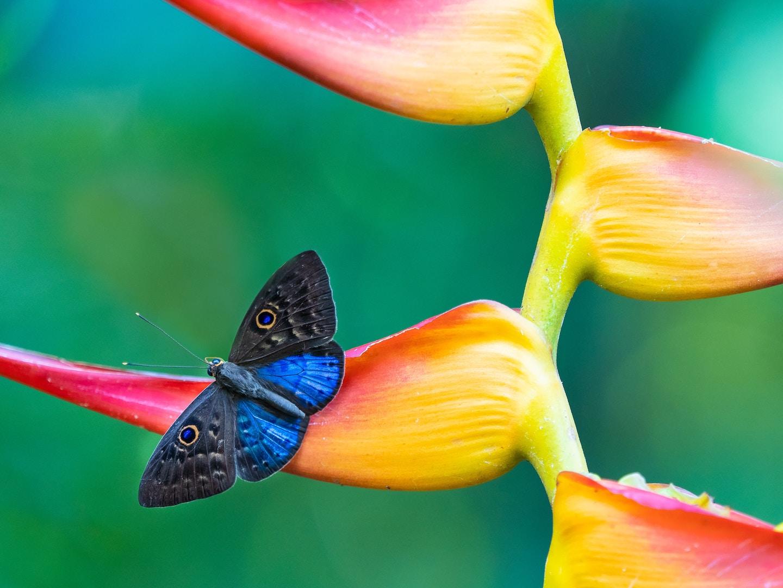 Spring Break In Costa Rica