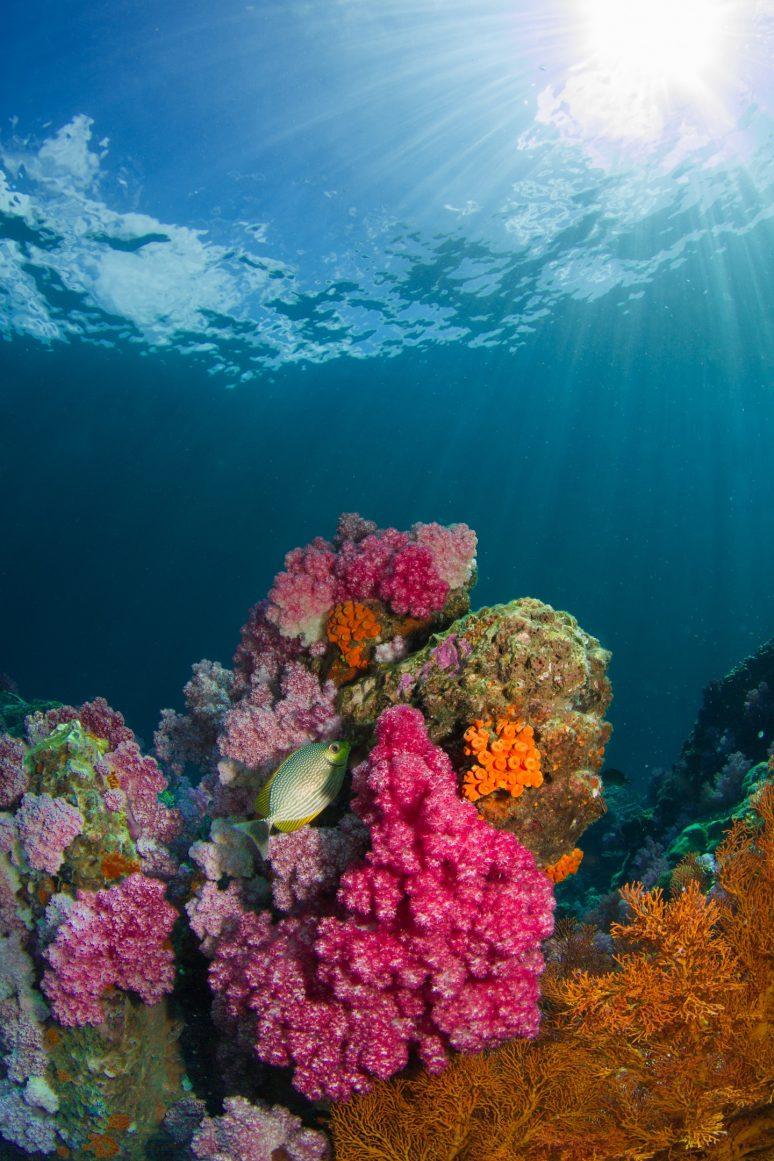 health seas