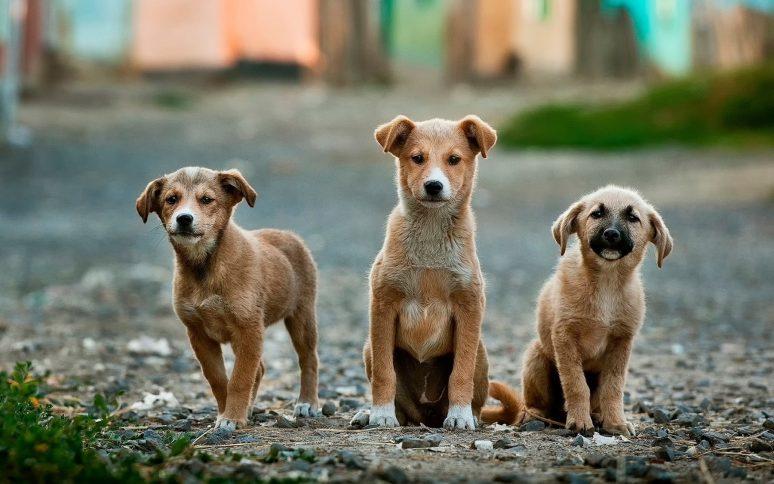 Soy Callejerito Animal Shelter Peru