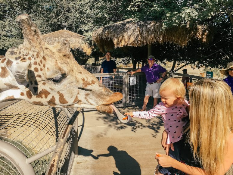 10 Awesome Family Travel Destinations To Visit With Young Kids