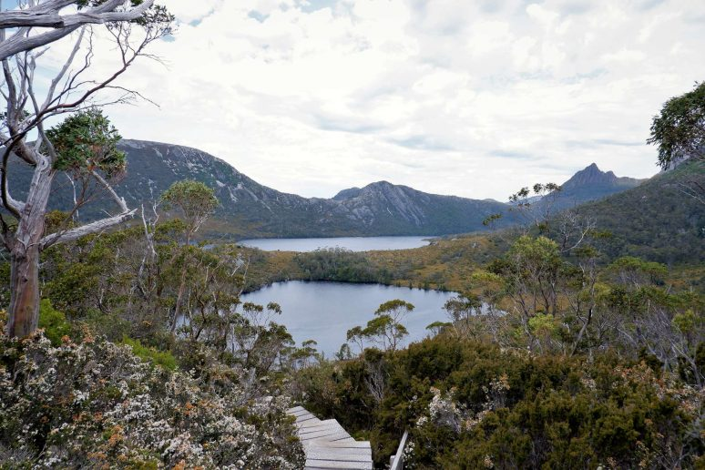 cradle-mountain-nature