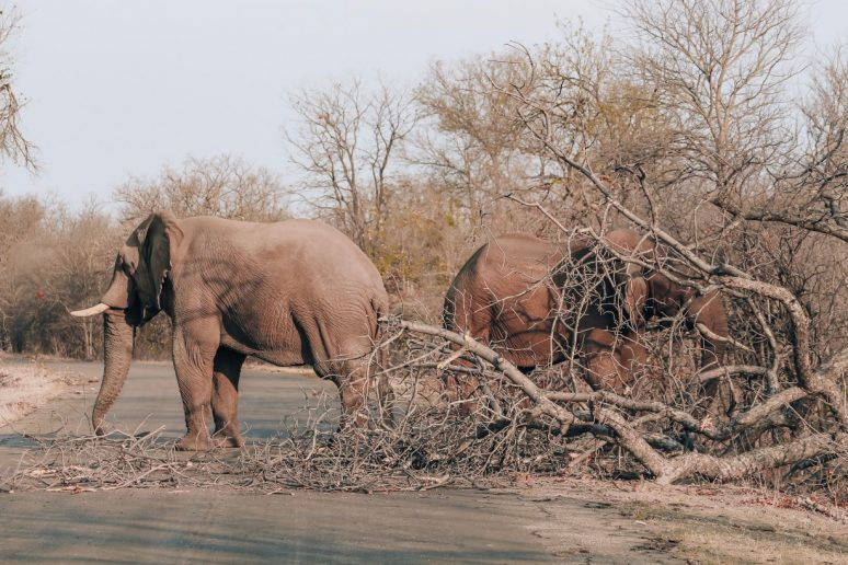 What To Know Before Your First Safari
