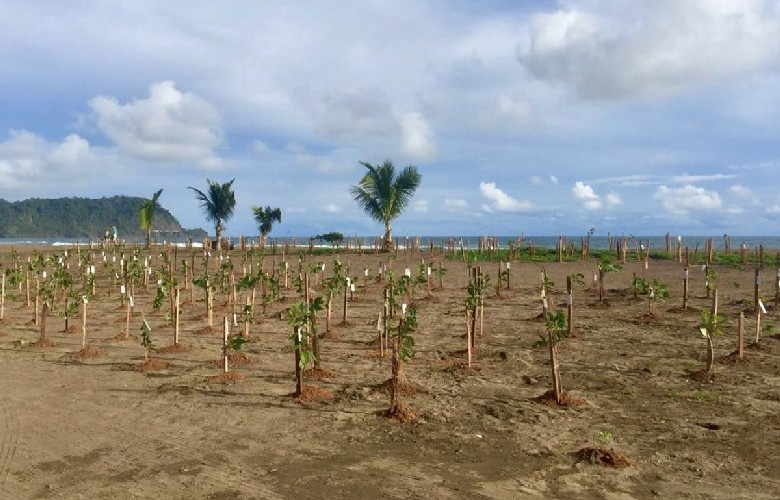 Reforesting-The-World