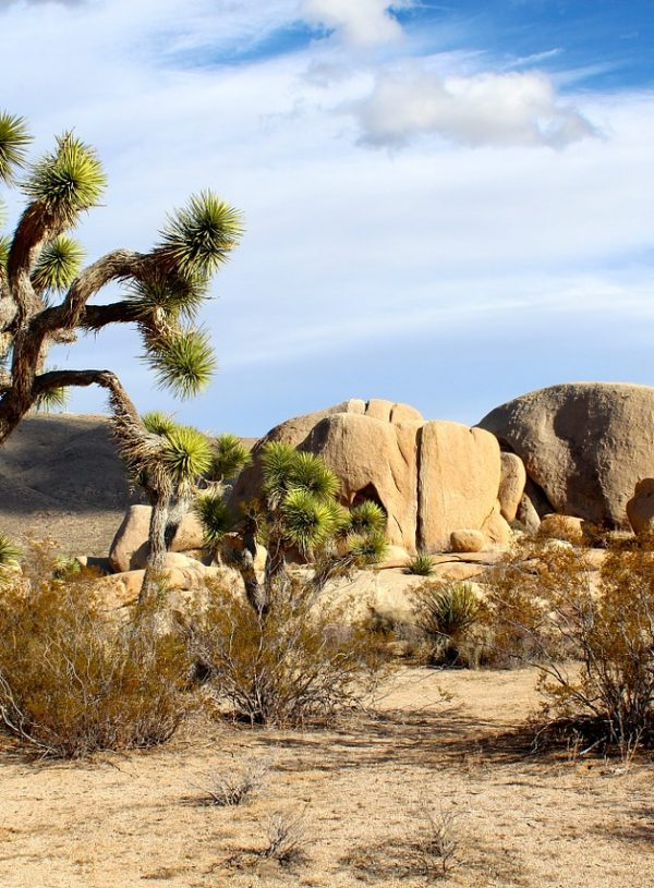 5 Unique Experiences In Palm Springs And Joshua Tree National Park