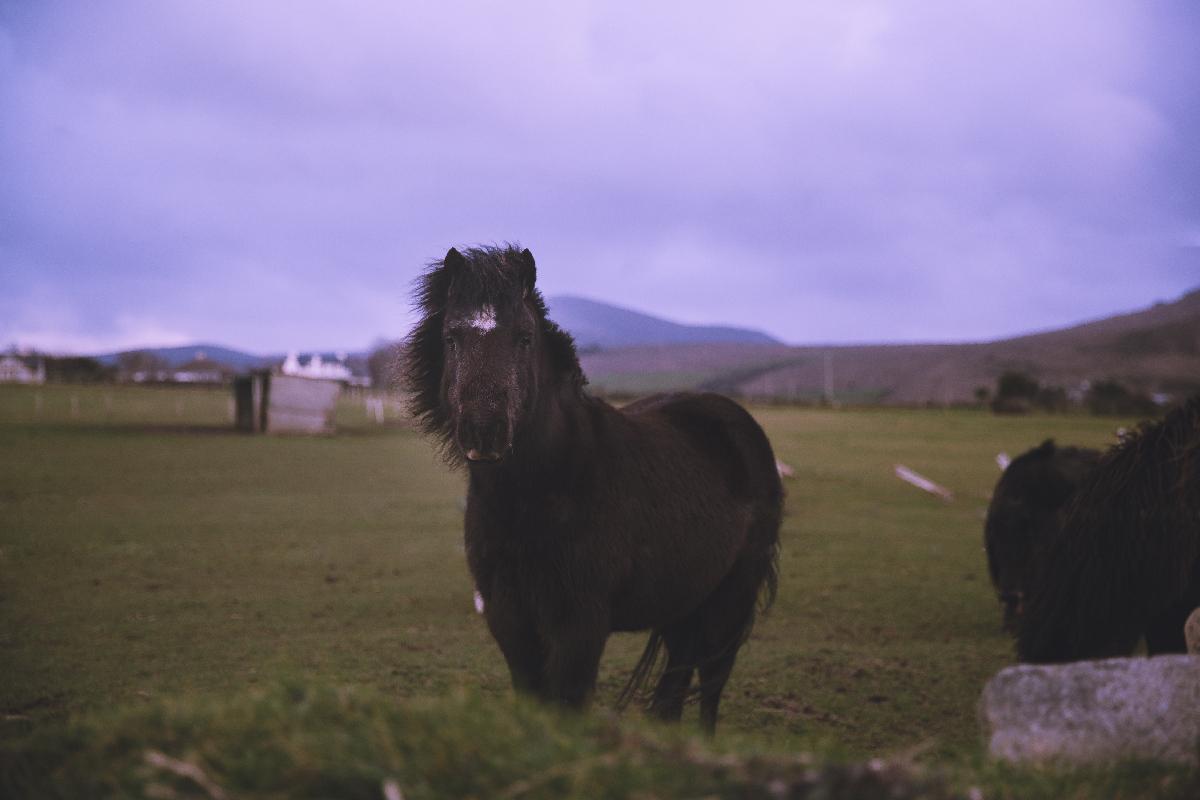 Ireland-Road-Trip-horses