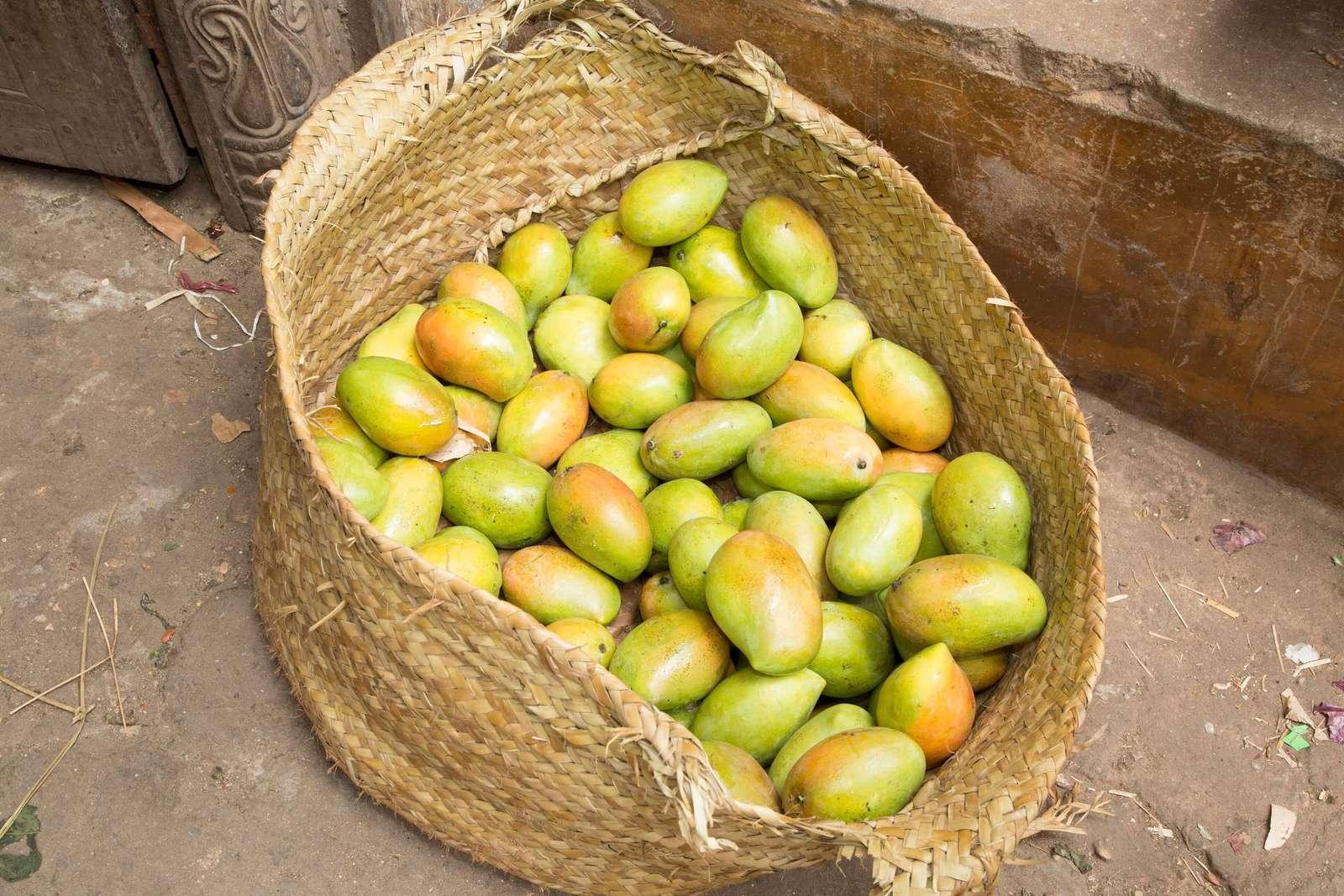 Bag of Mangos In Lamu Island, Kenya