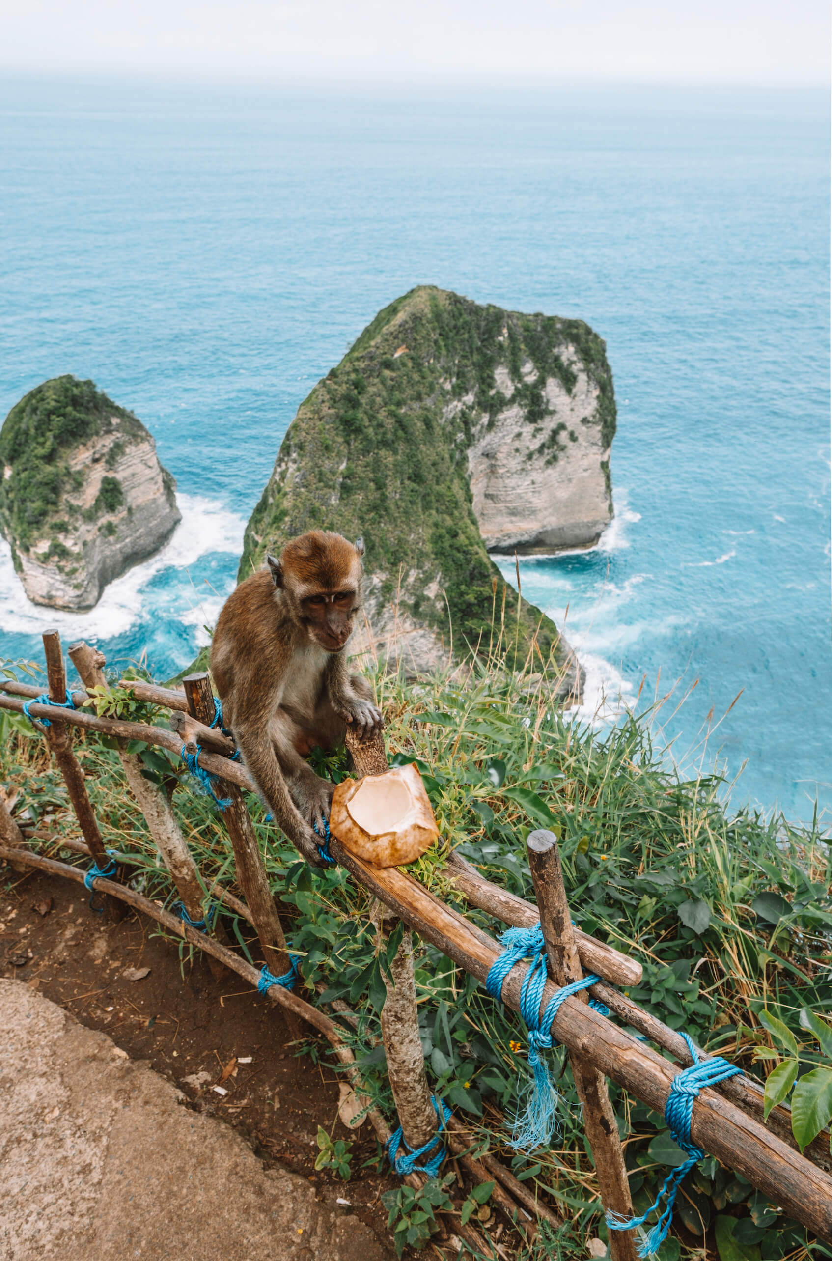 Monkey and coconut overlooking Kelingking Beach
