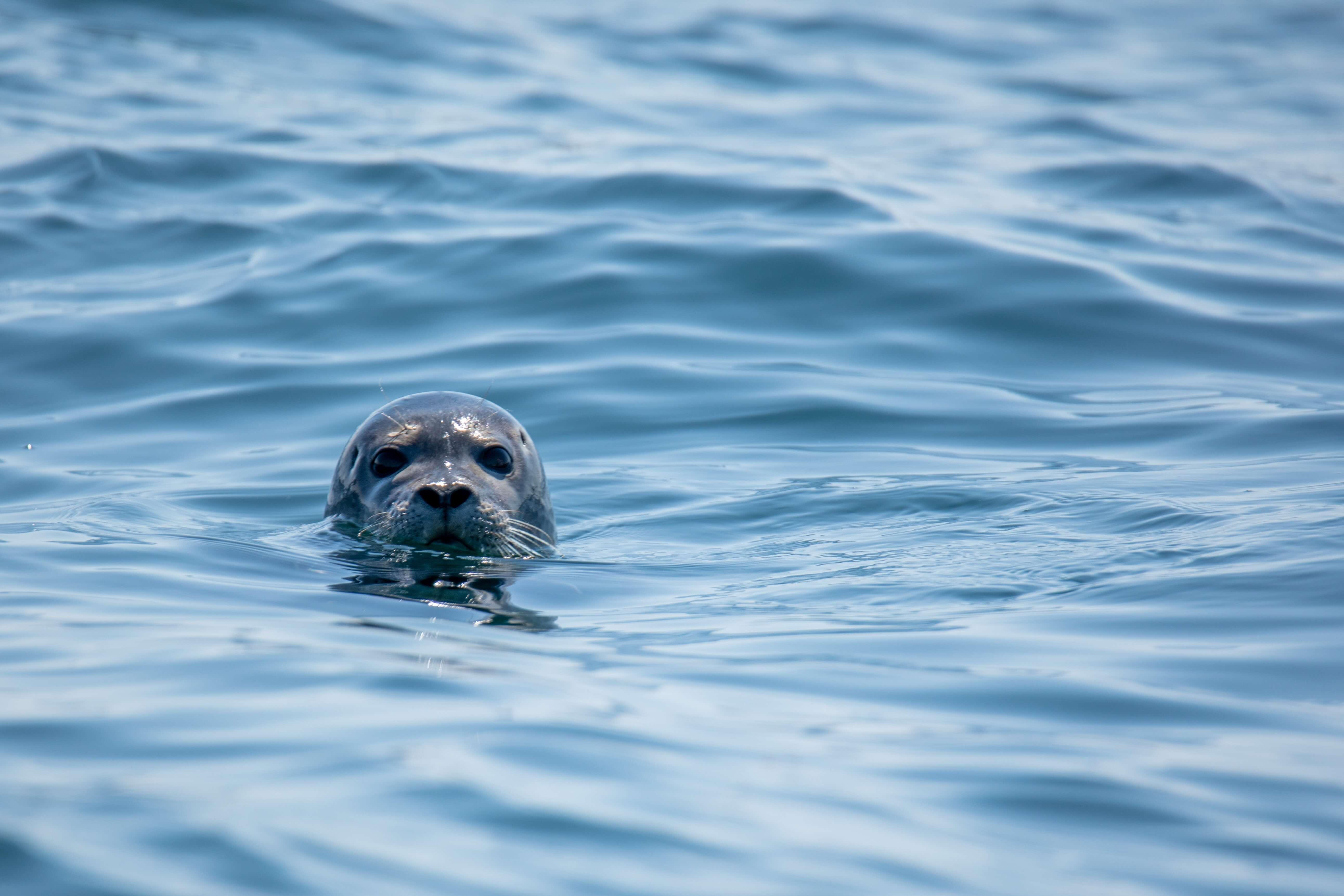 Charities We Love The Marine Mammal Center