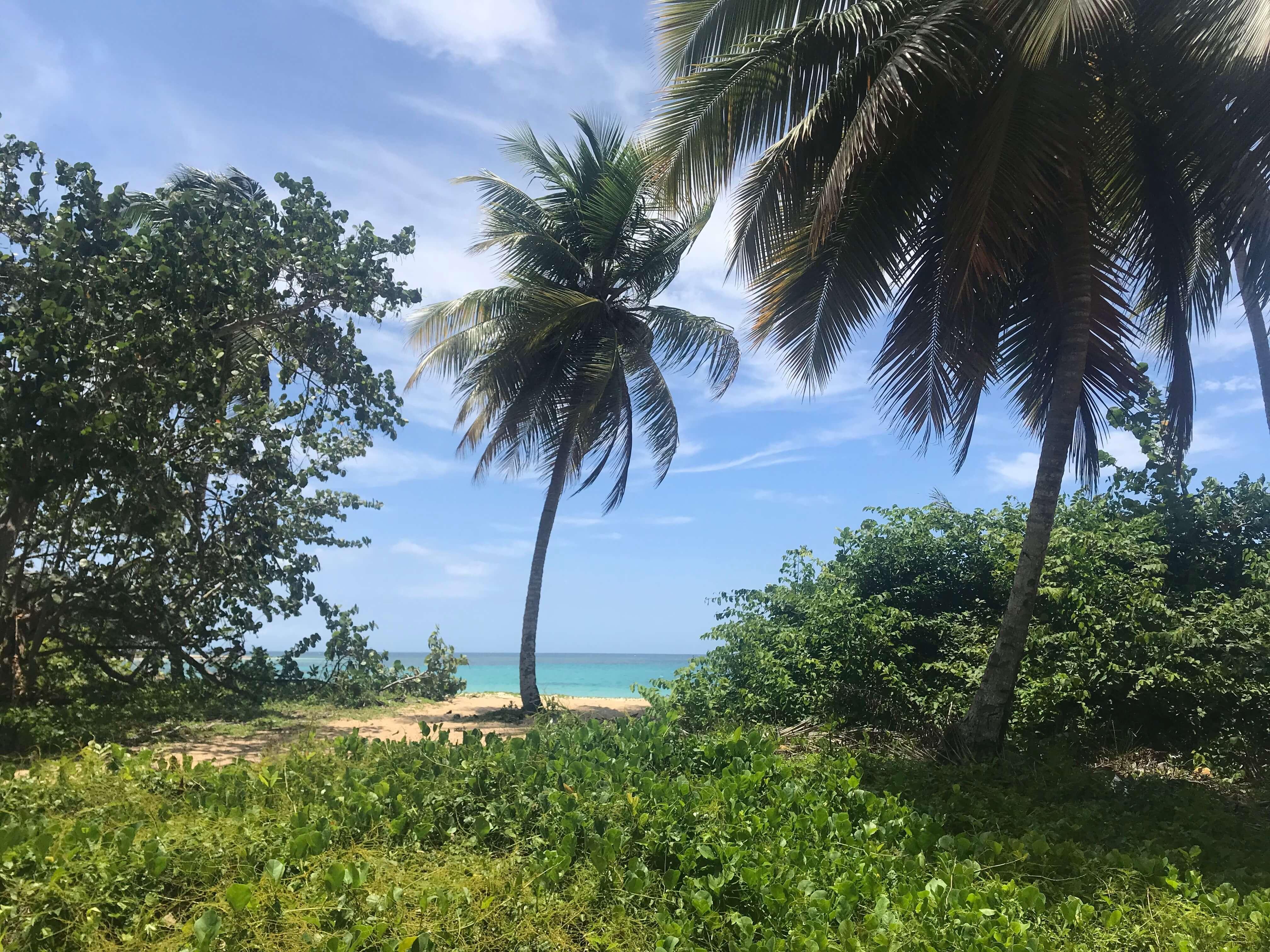 5 Things To Do In Las Terrenas, Dominican Republic