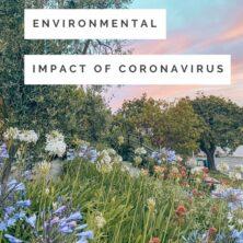 The Positive Environmental Impact Of Coronavirus